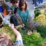 Diversas hierbas, lavanda, menta, manzanilla